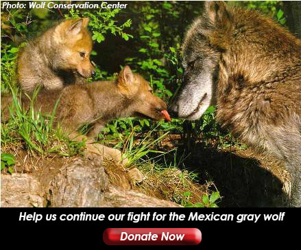 wolf and pups with donate
